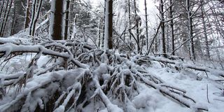 Forest Snowfall Landscape Illinois Royalty Free Stock Photo