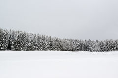 Forest during snowfall in winter Stock Photography