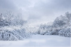 Forest in snowstorm Stock Photography