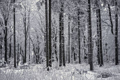 Forest in snowstorm Royalty Free Stock Images