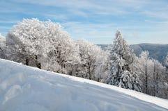 forest snowy Стоковое Фото