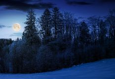 Forest on snowy hillside at night. In full moon light. beautiful nature background Stock Images