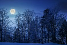 Forest on snowy hillside at night. In full moon light. beautiful nature background stock photography