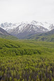 Forest and snowy mountains Royalty Free Stock Photos