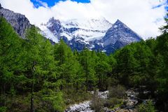 Forest and snowy mountains Royalty Free Stock Photography