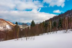 Forest on the snowy slope. Lovely landscape in mountains on a cloudy winter evening royalty free stock photo