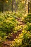 Forest in soerknatten nature reserve Stock Photography