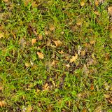 Forest Soil. Seamless Texture. Royalty Free Stock Images