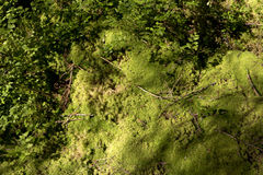 Forest soil with moss Stock Photos