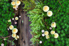 Forest soil: Mushrooms and moss Royalty Free Stock Photography