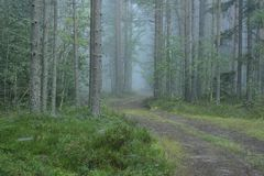 Forest soil path in the wood disappearing in fog.  Royalty Free Stock Images