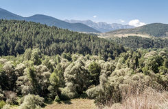 Forest of Sort. Situated in the spainish province of Lleida in pyrenees mountain. It´s  picture taken in a sunny day Stock Photography
