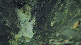 Forest sources of clean water stock footage