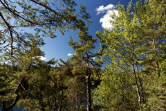 Forest in southern Sweden Royalty Free Stock Images