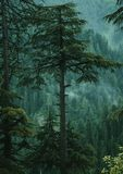Forest. Spending the evening after rain while camping within the clouds of Reshian, Azad Kashmir Pakistan stock photos