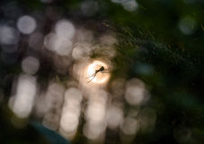 Forest spider web Stock Images