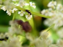 Forest spider on white flowers Stock Images