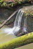 Forest Splash Stockfoto