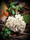 Forest Sponge Stock Photo