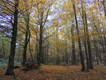 Forest Spot Imagen de archivo