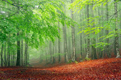 Forest in sprin Royalty Free Stock Images