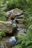 Forest spring. Small spring with cold clear water streaming in the forest Stock Image
