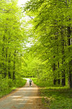 Forest at spring Royalty Free Stock Image