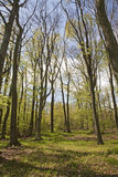 Forest in spring Stock Images