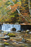 Forest spring in autumn. A small water spring making its way in the Carpathian Mountains Stock Images