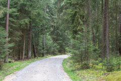 Forest in spring Stock Photography