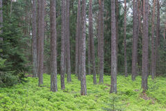 Forest in spring Stock Image