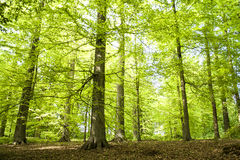Forest in spring Royalty Free Stock Photo