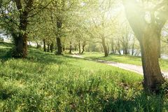 Forest in spring, bright sun, green grass Royalty Free Stock Photo