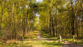 Forest in spring colors Royalty Free Stock Images