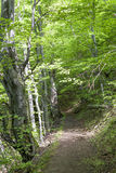 Forest. Spring day in a forest in Mehedinti, Romania Stock Photo