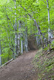 Forest. Spring day in a forest in Mehedinti, Romania Royalty Free Stock Images