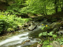 Forest in spring in el Rajao in La Rioja Royalty Free Stock Photo