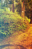 Forest in Spring. Filtered image: warm cross processed vintage effect. Royalty Free Stock Images