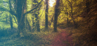Forest in Spring. Filtered image: warm cross processed vintage effect. Royalty Free Stock Photos