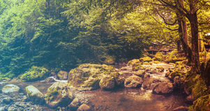 Forest in Spring. Filtered image: warm cross processed vintage effect. Royalty Free Stock Photo