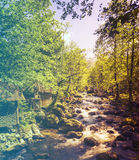 Forest in Spring. Filtered image: warm cross processed vintage effect. Stock Images