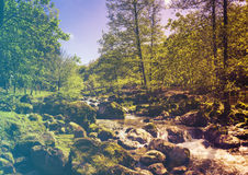 Forest in Spring. Filtered image: warm cross processed vintage effect. Stock Photos