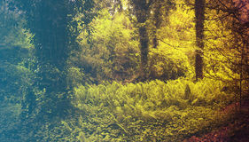 Forest in Spring. Filtered image: warm cross processed vintage effect. Royalty Free Stock Photography