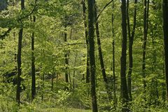Forest in spring in Germany Royalty Free Stock Image
