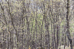 Forest. Spring landscape, pure nature, forest Stock Images