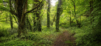 Forest in Spring stock photos