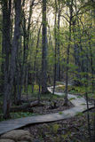 Forest in the spring morning Stock Photography
