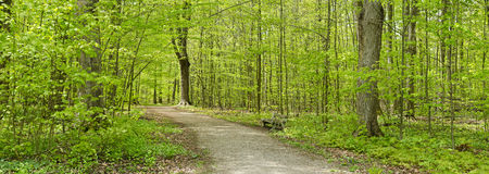 Forest in the Spring Panorama Royalty Free Stock Photography