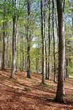 Forest in spring. Photo of a forest in spring Royalty Free Stock Photo