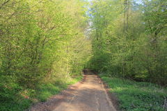 Forest in the spring Royalty Free Stock Photos